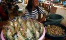 實拍非洲的海鮮市場,巨大龍蝦超級誘人,也許你也沒見過