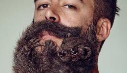 拉風的動物鬍鬚