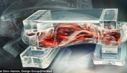 科學家用骨骼肌研製「生物機器人」