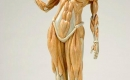 異想天開的解剖雕塑