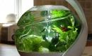自動凈化魚缸 Avo