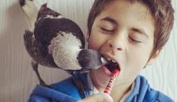 別再把小鳥關在籠裡:小男孩 Noah 與 「Penguin」 的跨種族情誼故事