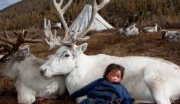 希望永遠都不會消失的內蒙古馴鹿民族