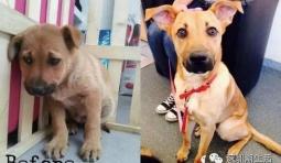 14隻狗狗被收養前後的表情對比, 動物真的有感覺的!