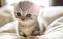 被收養的流浪貓的前後對比,遇到愛都會變回小天使~