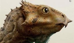 禿鷹臉恐龍」化石被發現, 體型像小貓