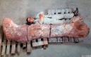 阿根廷現史上最大恐龍化石
