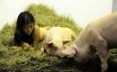 養兒不教,如同養豬?