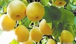 飯後吃哪種水果排出致癌物
