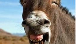 【Mop搜圖令】各種星人笑臉照,來~給朕笑一個,對,表情相當到位!!
