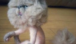 動物們剃毛之後你想象過嗎 那畫面美得不忍直視!!