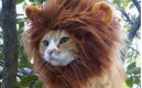 當可愛的寵物們穿上服裝,會有怎樣的表現呢?太有意思了!!