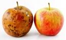 抗氧化劑,抗癌神話還是危險騙局?
