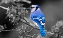 世界上壽命最長的鳥類是什麼?
