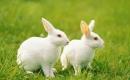 趣談「兔子吃狼」淺悟創業實戰兵法