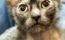 南非發現全球僅有的35隻狼人貓