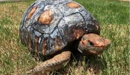 這隻失去殼的烏龜真真感受到了3D列印的魅力