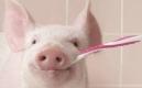 天呀,晚上不刷牙居然更容易患感冒和肺炎